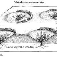 Agricultura en enarenado en Lanzarote - viñedos.jpg