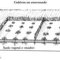 Agricultura en enarenado en Lanzarote - cultivos hídricos.jpg